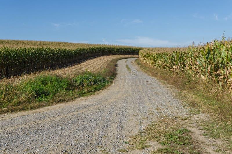 有土路的玉米田在它之间 免版税库存图片