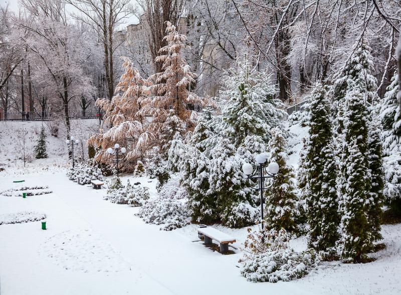 有圣诞树的冬天公园 库存图片