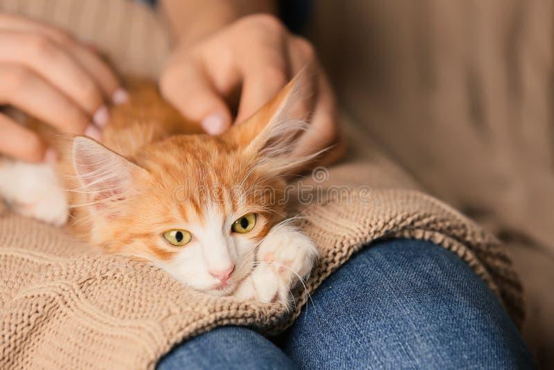 有在家逗人喜爱的小猫的妇女,特写镜头 免版税库存图片