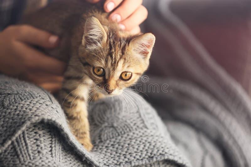 有在家逗人喜爱的小的小猫的妇女,特写镜头 库存照片