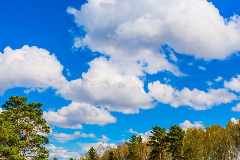 有在森林上的美丽的白色云彩 图库摄影