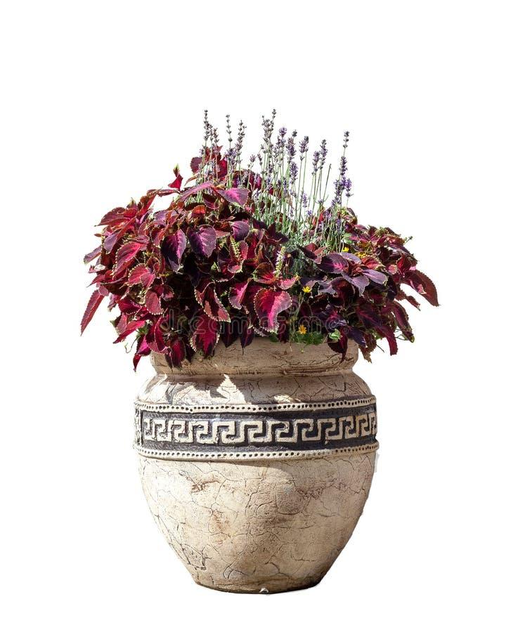 有在白色背景隔绝的各种各样的花的大老陶瓷花瓶 库存照片