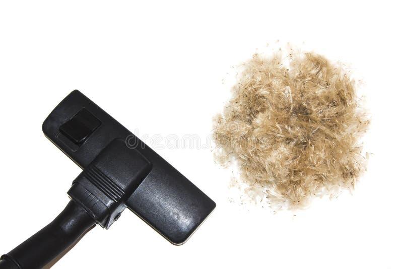 有在白色背景隔绝的吸尘器的清洁下来和头发 宠物吸尘的棕色头发羊毛  图库摄影