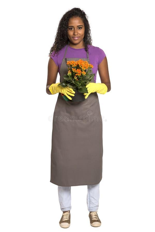 有在白色ba隔绝的花的美丽的非洲女孩花匠 库存图片