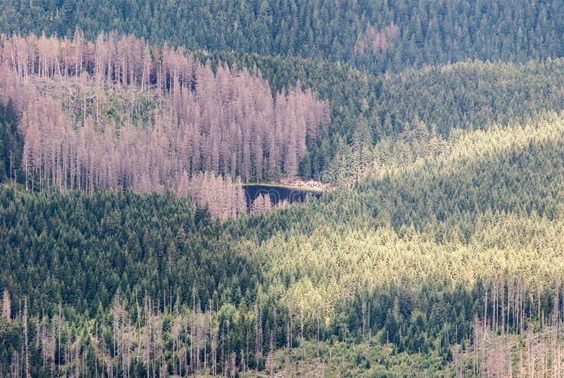 有在西部Tatras山的树皮甲虫大批出没摧残的森林的Smreczynski Staw湖在波兰 免版税图库摄影