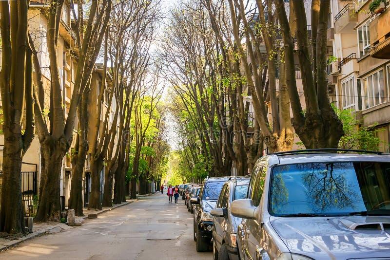 有在路旁停车场很多的狭窄的城市街道在老树机盖下在一个晴朗的春日 ?? 库存照片