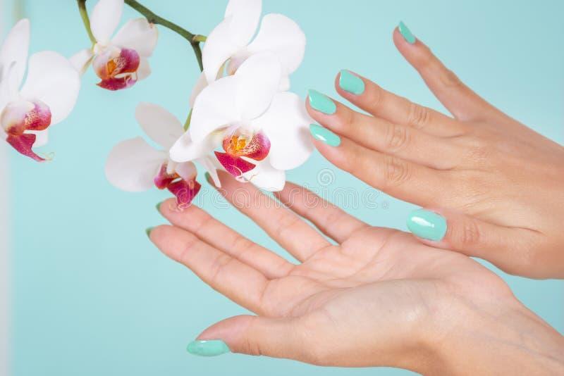有在软的蓝色背景和白色兰花花的妇女手隔绝的绿松石颜色修指甲在演播室 免版税库存照片