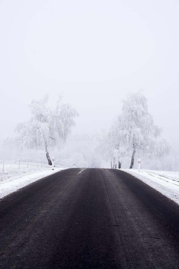 有在霜荒凉的天盖的白色树的冬天路 库存图片