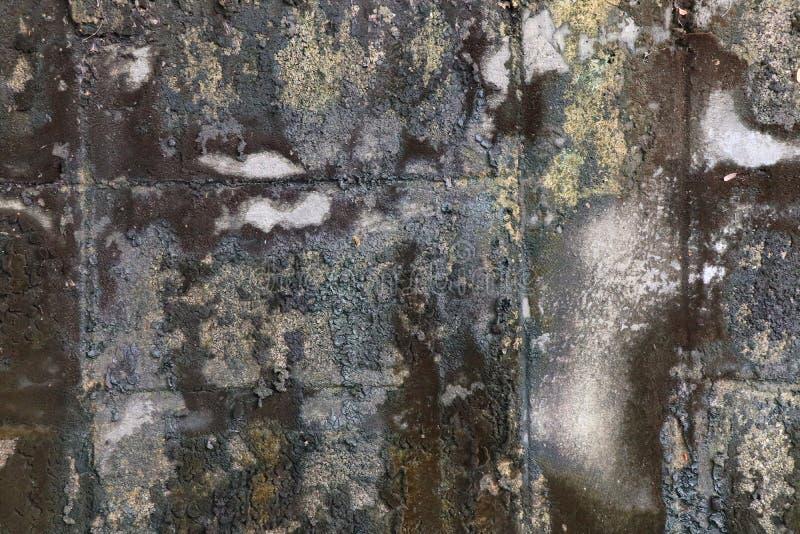 有地衣纹理的特写镜头肮脏的老水泥砖墙 免版税库存照片