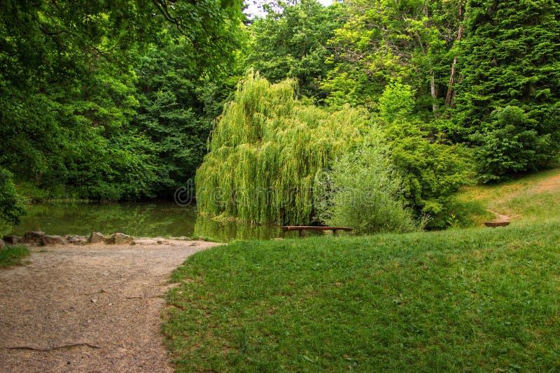 有垂柳的小湖 图库摄影