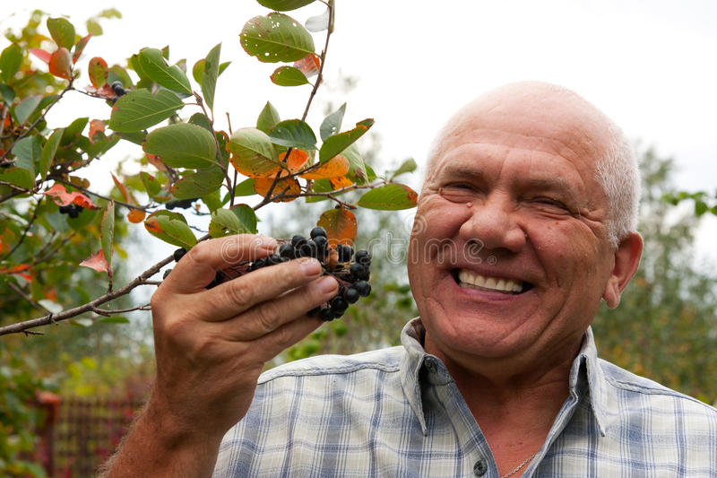 有堂梨属灌木的人 库存图片
