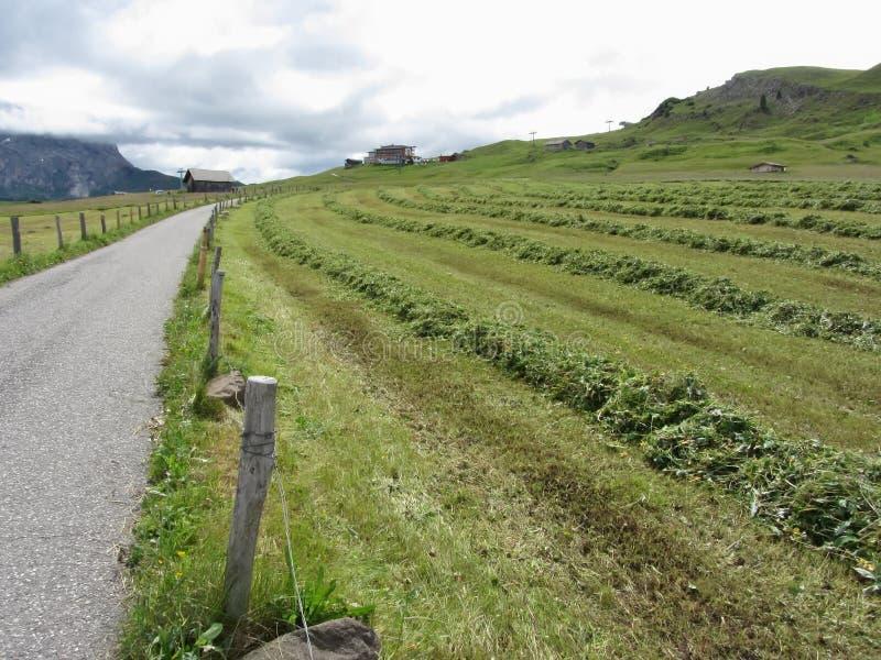 有堆的高山牧场地草剪报 图库摄影