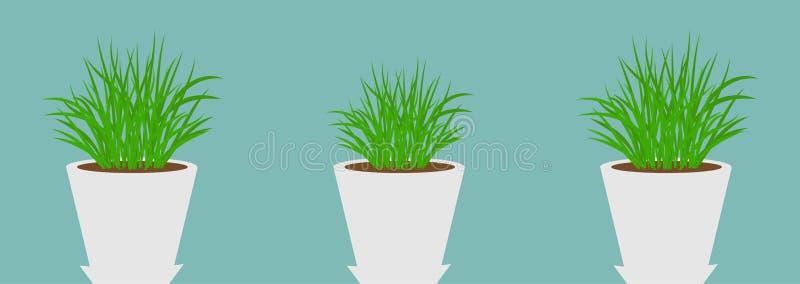 有增长的草象集合线的三个花盆 植物模板 r ?? r 皇族释放例证