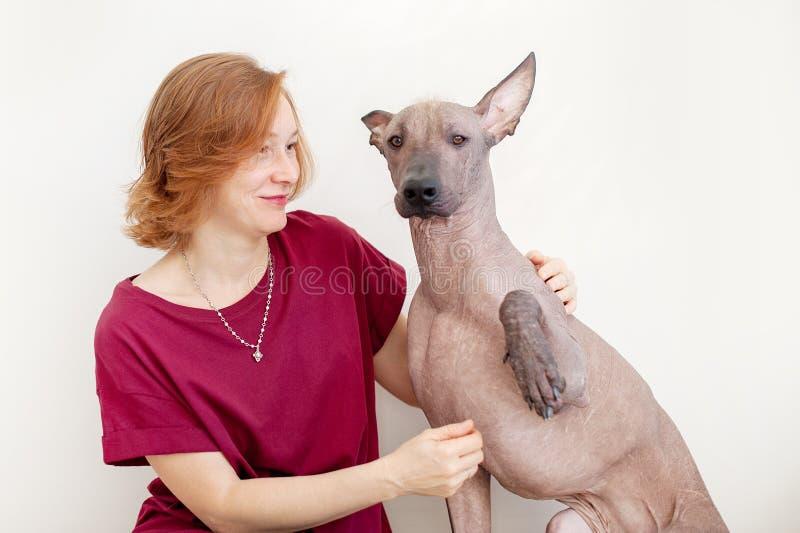 有墨西哥无毛的狗的一名妇女 库存图片
