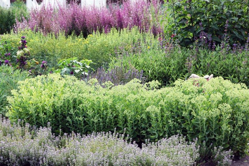 有多年生植物的一个富有的草本庭院 免版税图库摄影