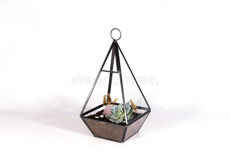 有多汁植物的下垂玻璃容器在白色背景 免版税库存照片