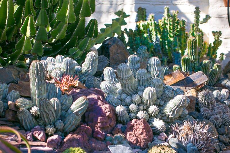 有多汁植物的沙漠庭院 免版税库存照片