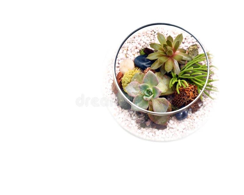 有多汁植物的玻璃容器从上面显示与空格 图库摄影