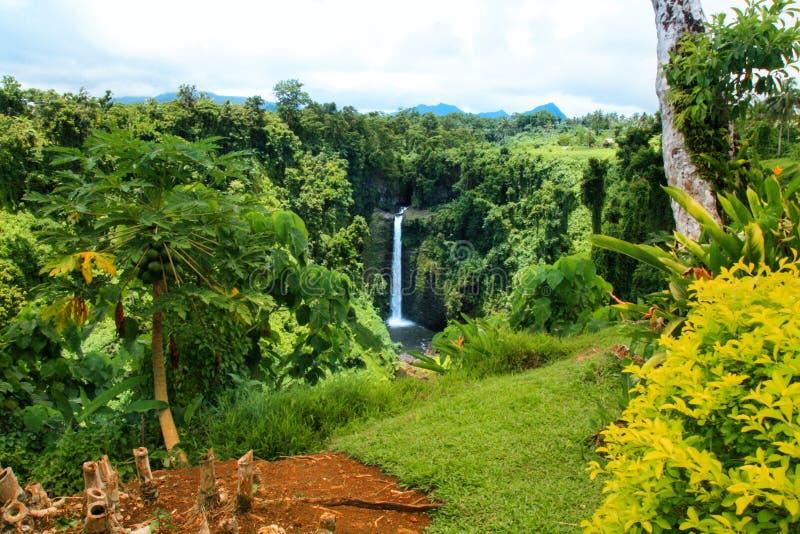 有大洋洲,萨摩亚,乌波卢岛海岛当地植被和植物的五颜六色的异乎寻常的庭院  免版税库存照片