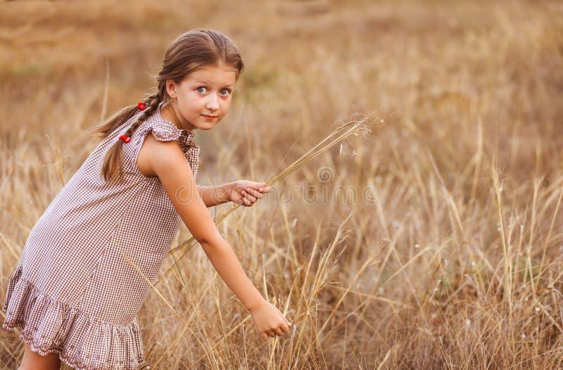 有大眼睛的女孩在麦田收集草本花束的 免版税库存图片