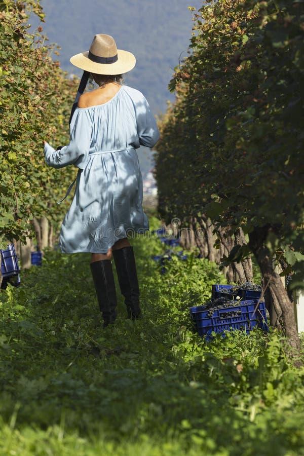 有天衣和草帽的女人在葡萄园散步 库存照片