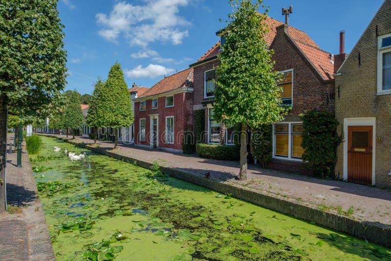 有天鹅的运河在Maasland,荷兰老村庄  库存照片
