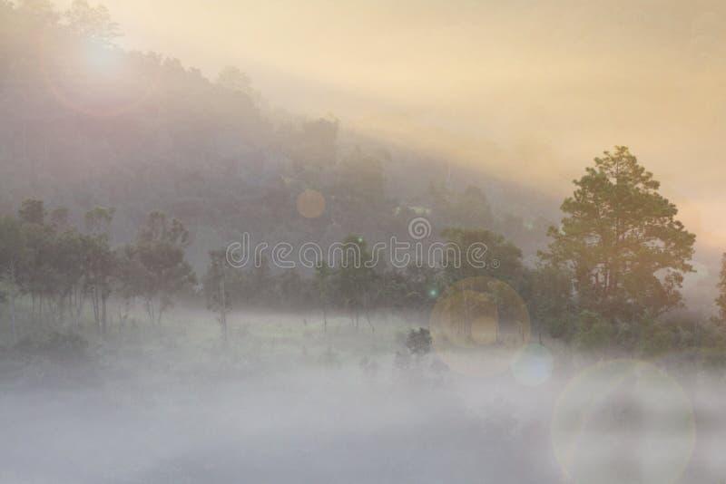 有太阳上升的有雾的海 图库摄影
