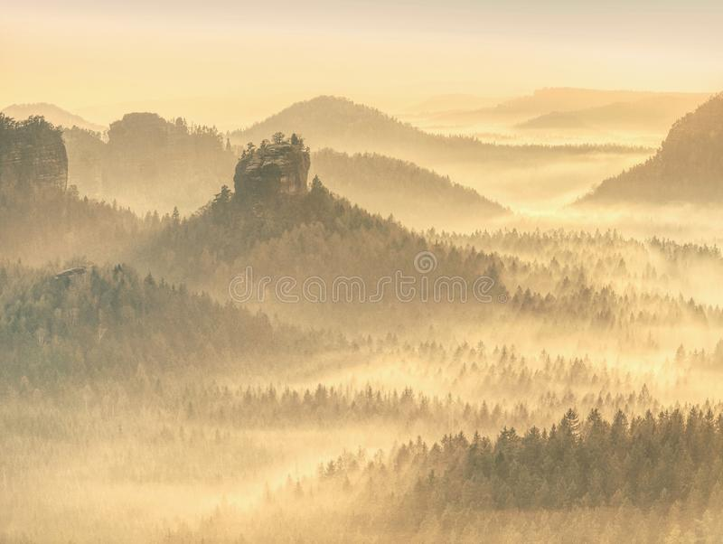 有太阳光芒的不可思议的秋天森林在早晨 免版税库存照片