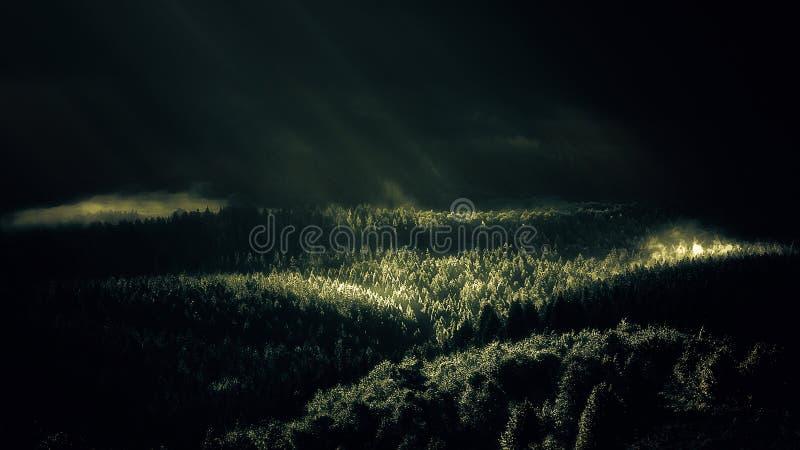 有太阳光芒的有雾的森林在早晨 图库摄影