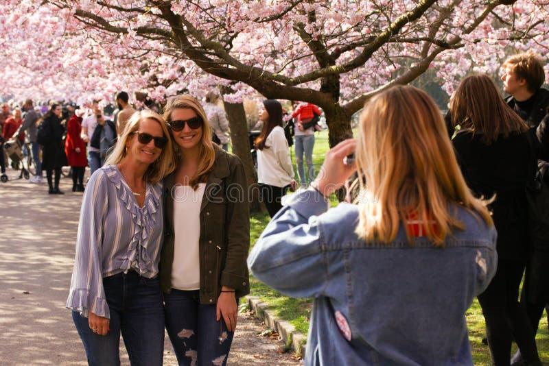 有太阳镜的两名妇女拍了他们的照片在一棵开花的日本樱花树下 免版税库存图片