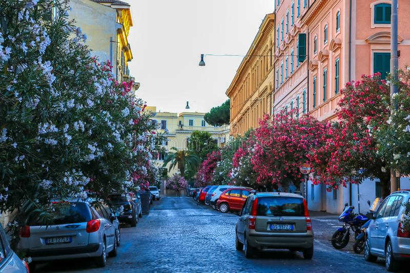 有夹竹桃和汽车的狭窄的街道在罗马,意大利 免版税库存照片