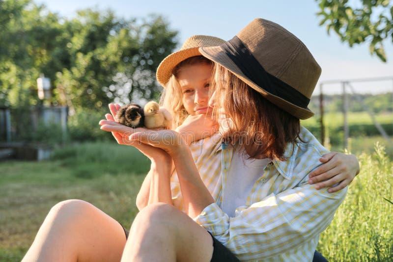 有女儿的幸福家庭母亲本质上,妇女在手,农场,国家土气样式上的拿着小新生儿小鸡 免版税库存照片