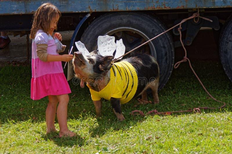 有她的宠物猪的在一个农业展示,Tapawera,新西兰女孩 图库摄影