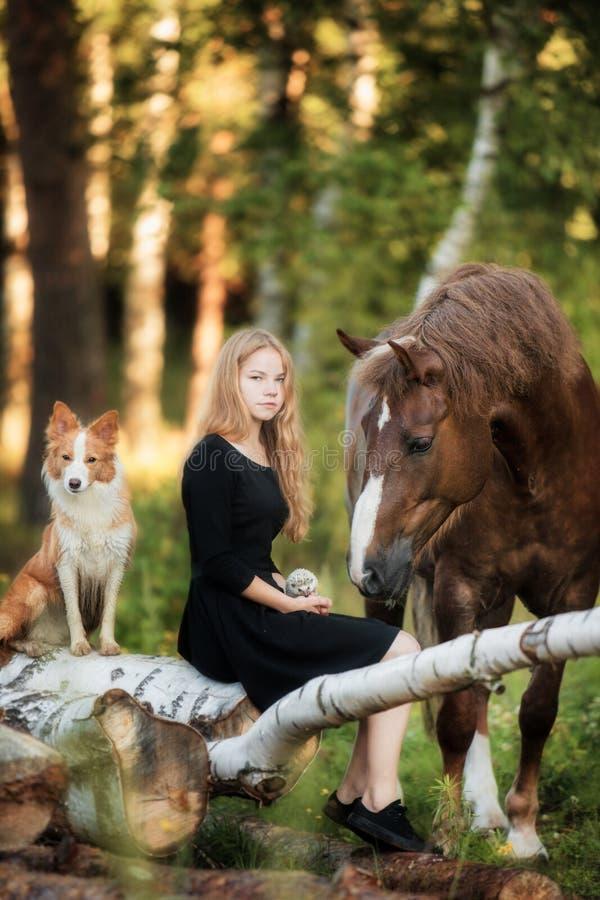 有她的马和博德牧羊犬狗的愉快的女孩 免版税库存图片