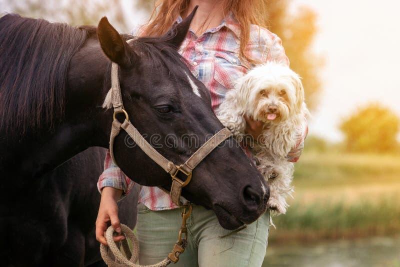 有她的马和她的小犬座的年轻女人 免版税库存图片