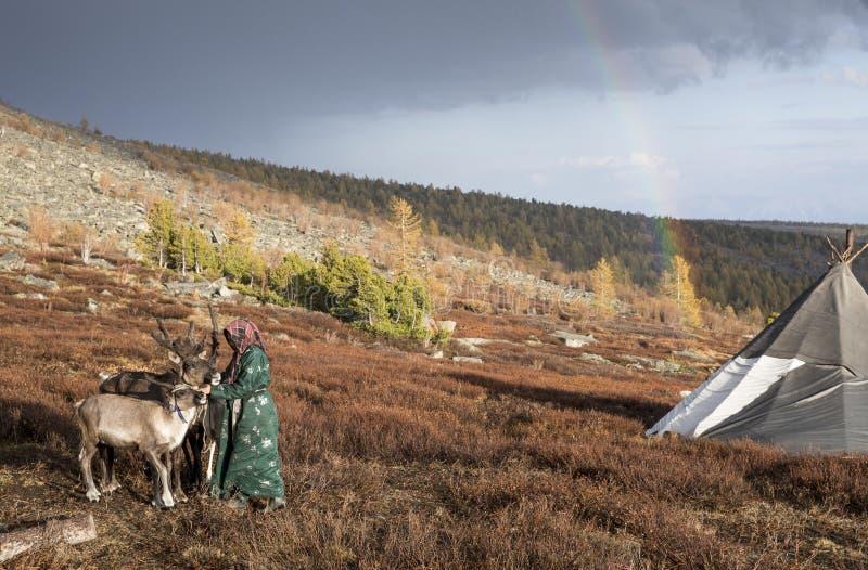 有她的驯鹿的Tsaatan妇女在酷寒北风蒙古风景  免版税库存照片