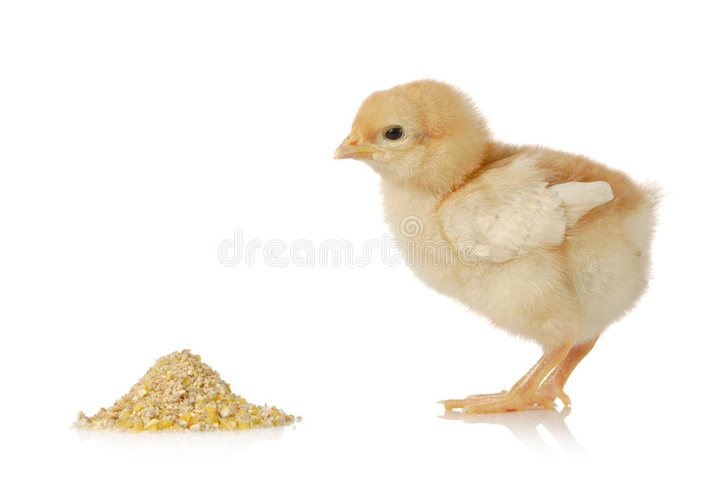 有婴孩的鸡膳食 免版税库存图片
