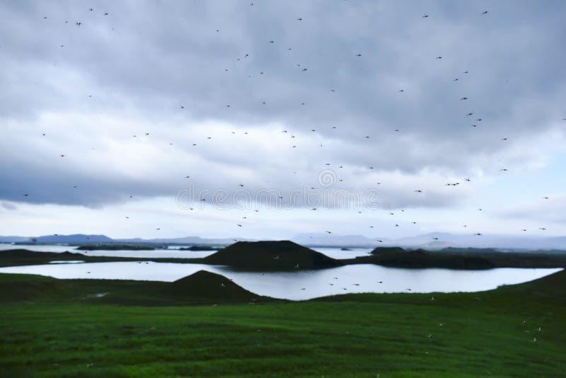 有它由此得名的蚊子的湖米湖 免版税图库摄影