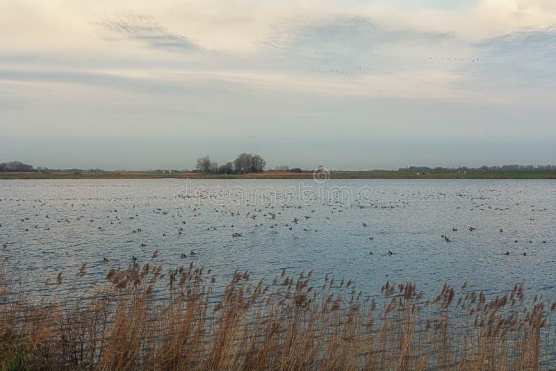 有它的垄沟和湖的典型的平的荷兰开拓地 库存图片