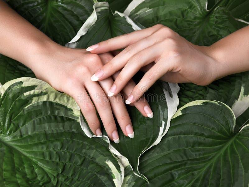 有完善的法式修剪的美丽的女性棕榈 手关心的天然化妆品 光指甲油,干净的软的皮肤 免版税库存照片