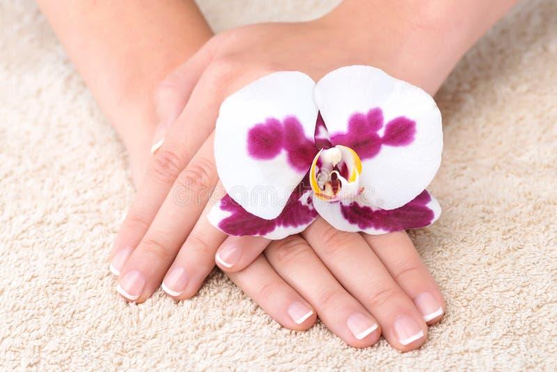 有完善的钉子法式修剪和兰花的美好的手 免版税库存图片