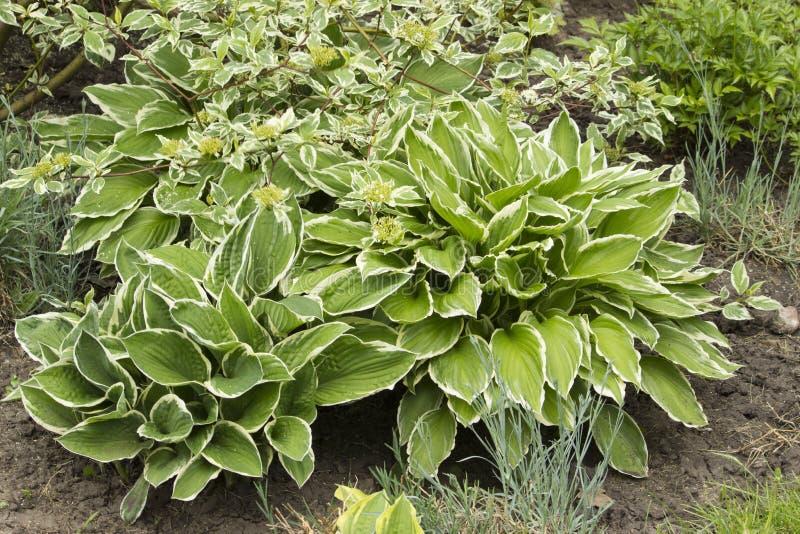 有密集和针对性的叶子的一棵植物 库存照片