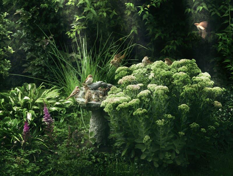有富有的成长和鸟浴的绿色庭院 免版税库存图片