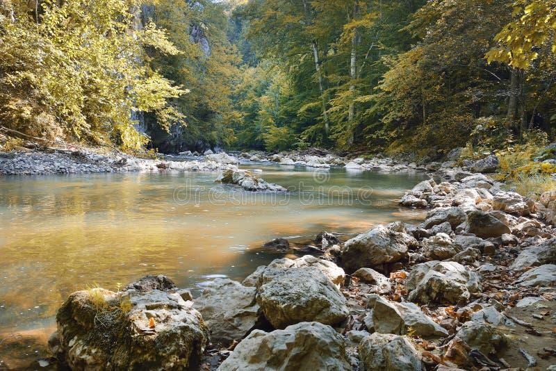 有小小河或狂放的河和五颜六色的下落的叶子的美丽的狂放的秋季森林 波兰森林在秋天 黑暗的前面 免版税库存图片