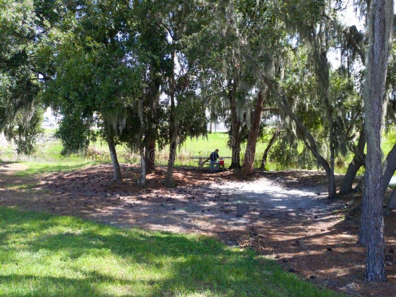 有小小河的绿色象草的公园在与白色蓬松云彩的明亮的晴朗的蓝天下 库存图片