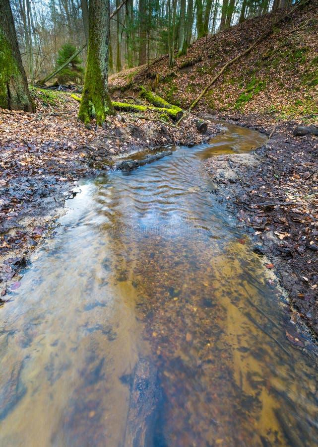 有小小河风景的早期的春天森林 免版税库存图片