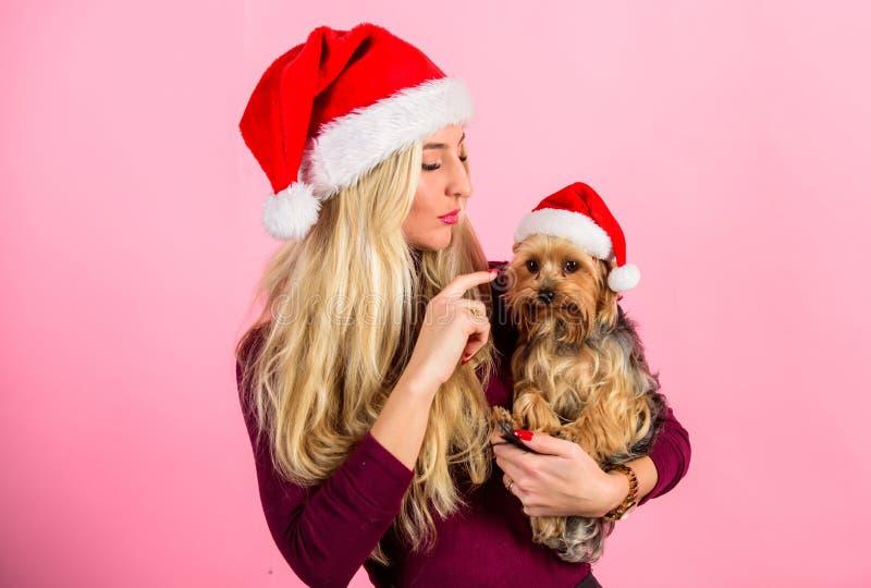 有小狗穿戴圣诞老人帽子的妇女 庆祝与宠物的圣诞节 方式有与宠物的圣诞快乐 原因爱 免版税图库摄影