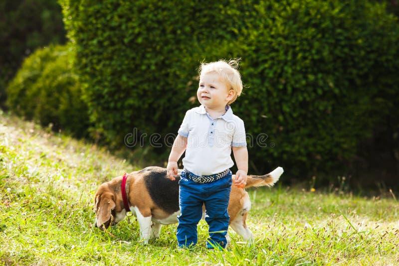 有小猎犬的男孩 库存图片