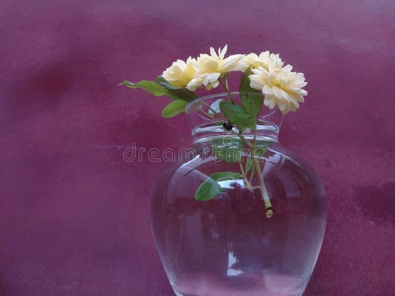 有小黄色花的花瓶 库存图片