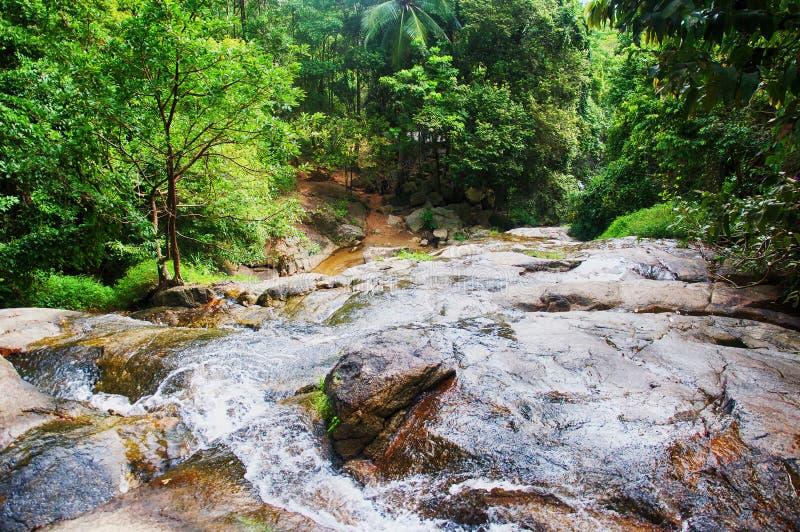有山小河的酸值苏梅岛热带森林 图库摄影